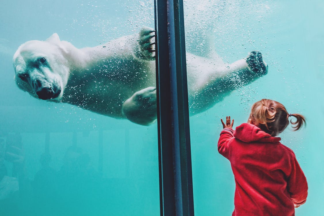 National Zoo [Interactive Whiteboard Installation]